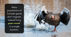 geese pest control services