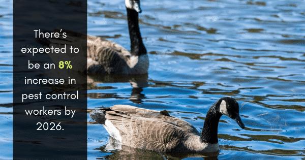 geese pest control service